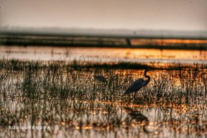 Heaven for bird lovers - Mangaljodi bird sanctuary, Chilika lake, Odisha