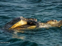 Mating in the sea