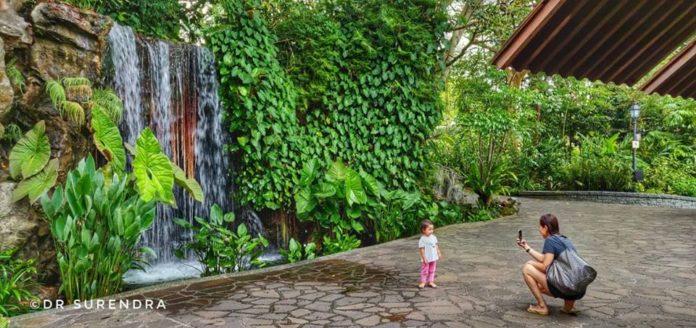Seen at Botanical gardens Singapore.