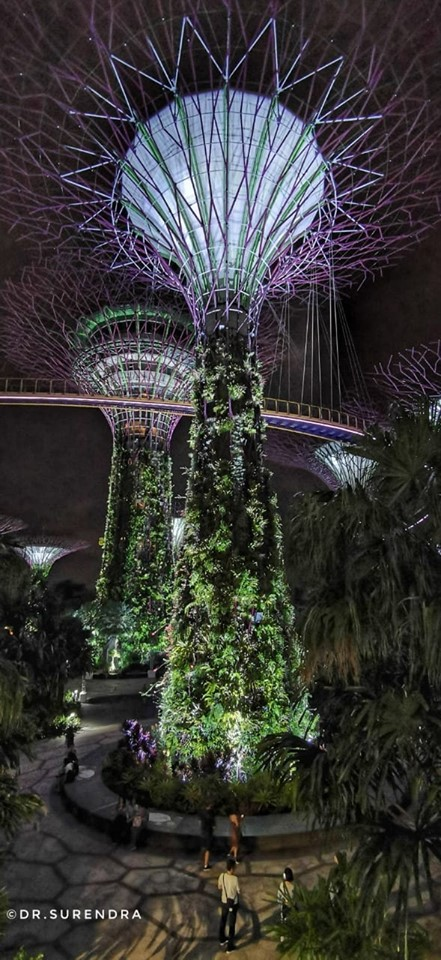 Super Trees at Gardens