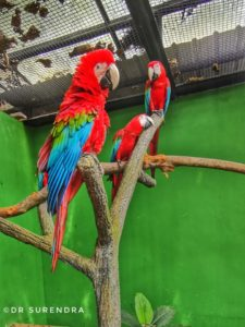 The Scarlet Macaws