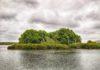 Mangrove island