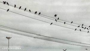 Crow'ded - seen at Kollam beach Kerala