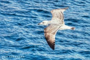 The seagull seen in Istanbul Turkey