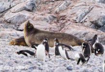 *Antarctica - Part 3- the Wildlife*