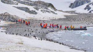No trees in Antarctica
