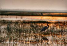 Heaven for bird lovers - Mangaljodi bird sanctuary, Chilika lake, Odisha