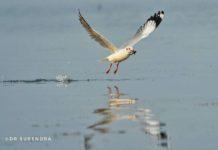 Got you - Seagulls