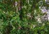 Scene at Botanical gardens Singapore