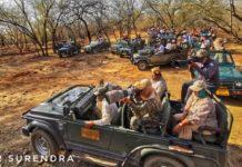 Tiger tales - tiger tourism, the flip side
