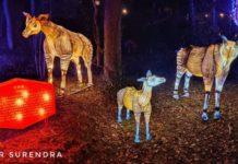 Zoolumination - Okapi