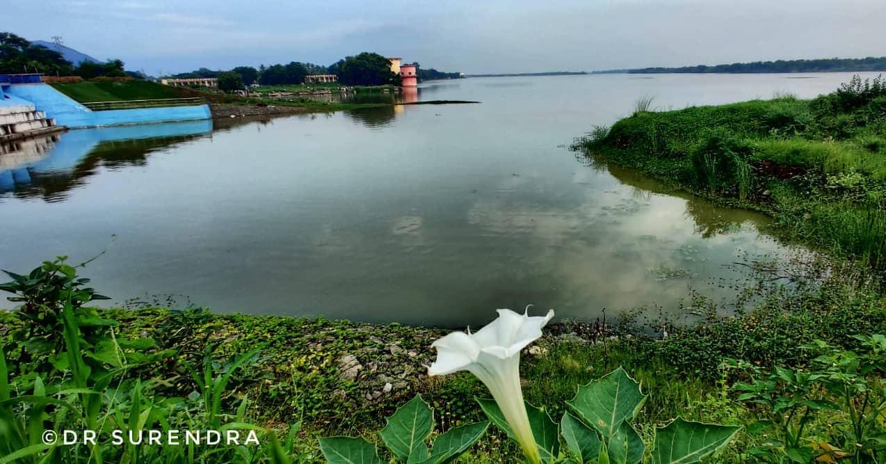 Riverside beauty.