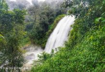 *My Picture of the day* - Chelavara waterfalls - remote and beautiful. Situated deep in forest on a tributary of river Cauvery, the waterfall in full flow. Seen at Kakkabe, Coorg Karnataka. ****** Dr.Surendra www.instagram.com/dr.surendra.2017