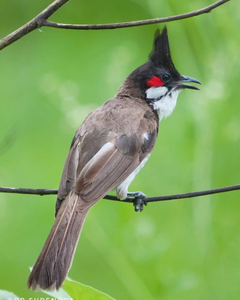 The birds of Amaravati