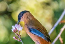 The Birds of Himalayas