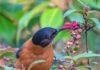 Enjoying the nectar