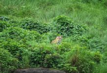 Lurking in the bush