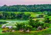 *My Picture of the day* Morning scene at Black diamond Ranch, Florida, US. ***** *Dr.Surendra* — at Black Diamond Ranch