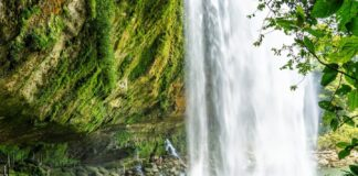 *My Picture of the day* The Misol-Há waterfall, Chiapas, Mexico - there is a cave behind the waterfall which can be accessed through a walkway. ***** *Dr.Surendra* — at Misol Há